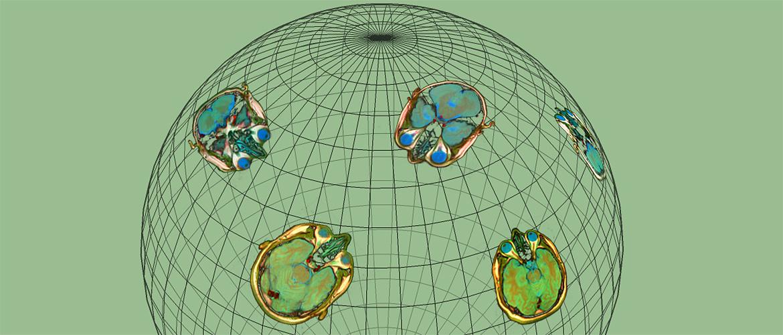 Sphereland Creatures